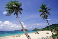Palm trees at Praia do Conbceicao beach, Parque Nacional de Fernando de Noronha, Fernando de Noronha, Pernambuco, Brazil, South 20025349979| 写真素材・ストックフォト・画像・イラスト素材|アマナイメージズ