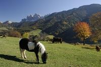 Val di Funes, Dolomites, Bolzano province, Trentino-Alto Adige, Italy, Europe