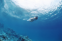 Fakarawa, Tuamotu Archipelago, French Polynesia, Pacific Islands, Pacific 20025350327| 写真素材・ストックフォト・画像・イラスト素材|アマナイメージズ