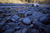 Bonfire on North Fork Quinalt River, Olympic National Park, UNESCO World Heritage Site, Washington State, United States of Ameri 20025350751| 写真素材・ストックフォト・画像・イラスト素材|アマナイメージズ