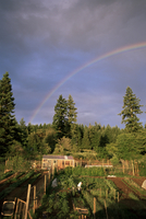 Farmer tending organic vegetable garden, Vashon Island, Puget Sound, Washington State, United States of America (U.S.A.), North 20025350755| 写真素材・ストックフォト・画像・イラスト素材|アマナイメージズ