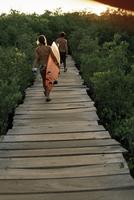 Boardwalk to surf from Cabinas las Olas, Avellanas Beach, Guanacaste State, northwest, Costa Rica, South America 20025350846| 写真素材・ストックフォト・画像・イラスト素材|アマナイメージズ