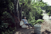Boy waits along roadside with bags of peanuts, on the outskirts of El Cadillar, Dominican Republic, Central America 20025350850| 写真素材・ストックフォト・画像・イラスト素材|アマナイメージズ