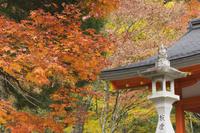 Eireiden Temple, Koya-san, Kansai (Western Province), Honshu, Japan, Asia 20025350907| 写真素材・ストックフォト・画像・イラスト素材|アマナイメージズ