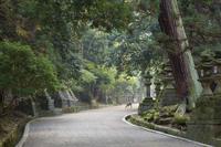 Path to Kasuga-Taisha Shrine, UNESCO World Heritage Site, Nara, Kansai (Western Province), Honshu, Japan, Asia