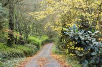 Gravel road in autumn, Dandenong Ranges, Victoria, Australia, Pacific