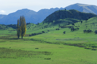 Pasture, Wanaka, Central Otago, South Island, New Zealand, Pacific