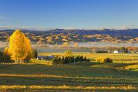 Farmland, Alexandra, Central Otago, South Island, New Zealand, Pacific