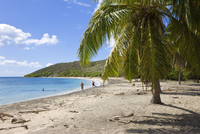 Turtle Beach on the southeast peninsula, St. Kitts, Leeward Islands, West Indies, Caribbean, Central America 20025351883| 写真素材・ストックフォト・画像・イラスト素材|アマナイメージズ