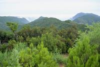 Garajonay national Park, UNESCO World Heritage Site, La Gomera, Canary Islands, Spain, Atlantic, Europe