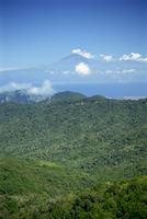 Garajonay national Park, UNESCO World Heritage Site, with island of Tenerife in the background, La Gomera, Canary Islands, Spain