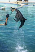 Dolphins show, Oceanarium, Port Elizabeth, South Africa, Africa 20025352955| 写真素材・ストックフォト・画像・イラスト素材|アマナイメージズ