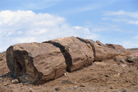 Petrified forest in Gurbantinggut Desert in north east Xinjiang, China, Asia 20025353160| 写真素材・ストックフォト・画像・イラスト素材|アマナイメージズ