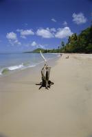 Beach at Choc Bay, St. Lucia, Windward Islands, West Indies, Caribbean, Central America 20025353560| 写真素材・ストックフォト・画像・イラスト素材|アマナイメージズ