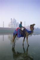 Camel and rider in front of the Taj Mahal and Yamuna (Jumna) River, Taj Mahal, UNESCO World Heritage Site, Agra, Uttar Pradesh s