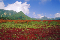 Daisetsuzan National Park in Autumn, Hokkaido, Japan 20025353639| 写真素材・ストックフォト・画像・イラスト素材|アマナイメージズ