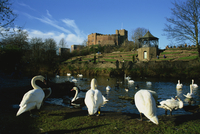 Castle and River Teme, Tamworth, Staffordshire, England, United Kingdom, Europe