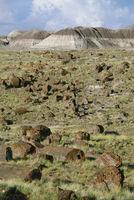 Fossil logs 200 million years old scattered over desert floor in National Park, Petrified Forest National Park, Arizona, United 20025354014| 写真素材・ストックフォト・画像・イラスト素材|アマナイメージズ