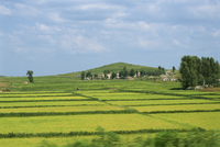Rice fields in Imjin Valley, Kaesong, North Korea, Asia