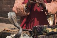 Snake charmer, Patan, Bagmati, Nepal, Asia 20025354253| 写真素材・ストックフォト・画像・イラスト素材|アマナイメージズ