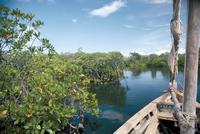 Mangrove swamp, Lamu Island, Kenya, East Africa, Africa