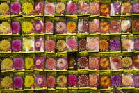 Seed packets, Bloemenmarkt (flower market), Amsterdam, Netherlands, Europe 20025355252  写真素材・ストックフォト・画像・イラスト素材 アマナイメージズ