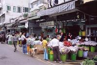 Flower market, Mong Kok, Kowloon, Hong Kong, China, Asia 20025355280| 写真素材・ストックフォト・画像・イラスト素材|アマナイメージズ
