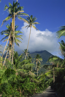 Landscape, Nevis, Leeward Islands, West Indies, Caribbean, Central America