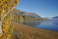 Trees in autumn, Lake Wanaka, Otago, South Island, New Zealand, Pacific