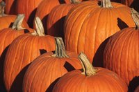 Pumpkins, The Hamptons, Long Island, New York State, United States of America, North America