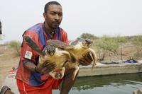 Turtles, Island of Sal (Salt), Cape Verde Islands, Africa 20025356787| 写真素材・ストックフォト・画像・イラスト素材|アマナイメージズ