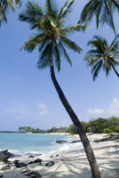 Kona State Beach, Island of Hawaii (Big Island), Hawaii, United States of America, Pacific, North America