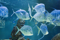 Aquarium, Oceanographic Institute, Monaco-Veille, Monaco, Europe 20025357572| 写真素材・ストックフォト・画像・イラスト素材|アマナイメージズ