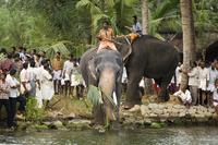Elephant Festival,Kerala,India 20025358260  写真素材・ストックフォト・画像・イラスト素材 アマナイメージズ