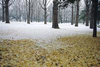Winter scene, Yoyogi koen (park), Tokyo, Japan
