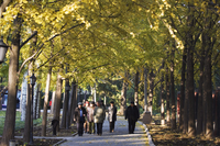 People walking under an avenue of autumn coloured trees in Ritan Park, Beijing, China, Asia 20025358566| 写真素材・ストックフォト・画像・イラスト素材|アマナイメージズ