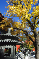 Autumn colours at a temple in Fragrant Hills Park in the Western Hills, Beijing, China, Asia