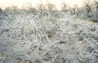 Dead wood, El Chalten, Patagonia, Argentina, South America 20025358662  写真素材・ストックフォト・画像・イラスト素材 アマナイメージズ