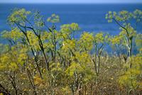 Coast, island of Sardinia, Italy, Mediterranean, Europe 20025358778  写真素材・ストックフォト・画像・イラスト素材 アマナイメージズ