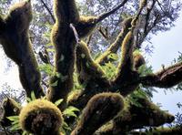 Queen Charlotte Islands, British Columbia (B.C.), Canada, North America 20025358801  写真素材・ストックフォト・画像・イラスト素材 アマナイメージズ