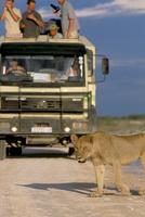 Tourists and lion (Panthera leo), Etosha National Park, Namibia, Africa