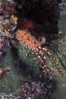 Marine life, underwater