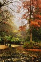The boathouse, Alfred Nicholas Gardens, Dandenong Ranges, Victoria, Australia, Pacific 20025359753| 写真素材・ストックフォト・画像・イラスト素材|アマナイメージズ