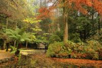 The boathouse, Alfred Nicholas Gardens, Dandenong Ranges, Victoria, Australia, Pacific 20025359754| 写真素材・ストックフォト・画像・イラスト素材|アマナイメージズ