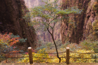 Autumn colors, Xihai (West Sea) Valley, Mount Huangshan (Yellow Mountain), UNESCO World Heritage Site, Anhui Province, China, As 20025359802| 写真素材・ストックフォト・画像・イラスト素材|アマナイメージズ