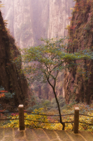 Autumn colors, Xihai (West Sea) Valley, Mount Huangshan (Yellow Mountain), UNESCO World Heritage Site, Anhui Province, China, As 20025359803| 写真素材・ストックフォト・画像・イラスト素材|アマナイメージズ