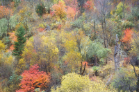 Autumn colours, Yading Nature Reserve, Sichuan Province, China, Asia