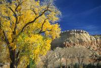 Cottonwood, Rio Arriba County, New Mexico, United States of America, North America 20025359965| 写真素材・ストックフォト・画像・イラスト素材|アマナイメージズ
