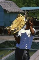 Turtle rearing compound, Kukup, Malaysia, Southeast Asia, Asia 20025360639  写真素材・ストックフォト・画像・イラスト素材 アマナイメージズ