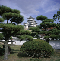 Trees in front of Himeji-jo (Himeji Castle), dating from 1580 and known as Shirasagi (White Egret), UNESCO World Heritage Site,
